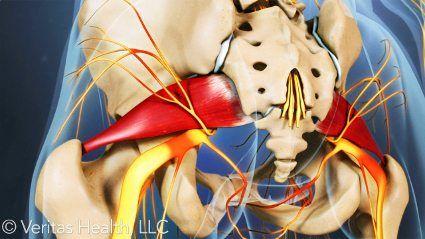 Muscolo del muscolo piriforme