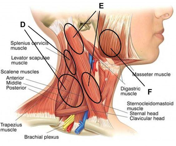 11860 Vista Del Sol, Ste. 126 Symptoms of Upper Cervical Disorders El Paso, TX.