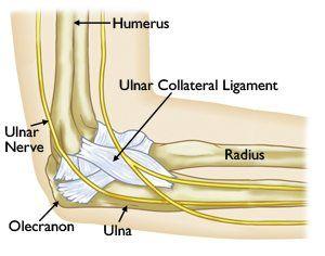 Ульнарная анатомия связок - El Paso Chiropractor
