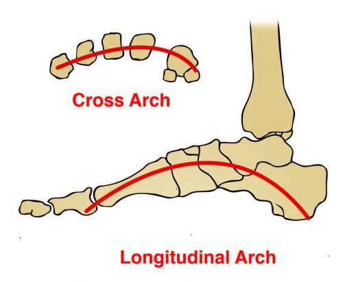 Longitudinal and Transverse Arches of the Foot Diagram - El Paso Chiropractor
