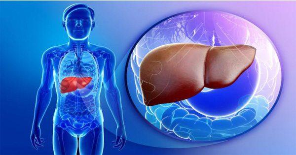 illustrazione del blog di vedere attraverso il corpo nel fegato