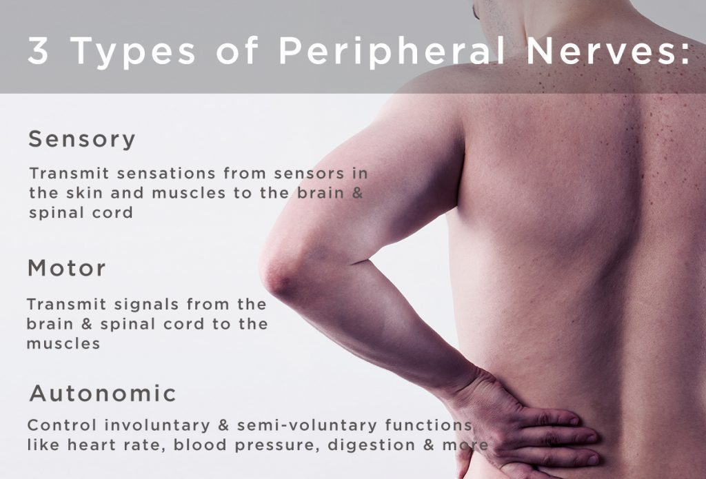 three types of peripheral nerves