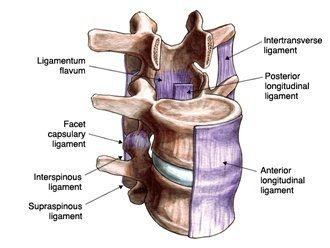 Ligaments labeled