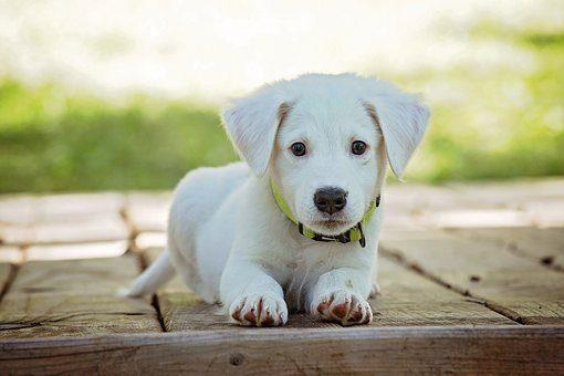 foto di blog di cucciolo che stabilisce