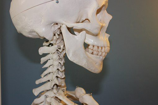 blog picture of human skeleton model
