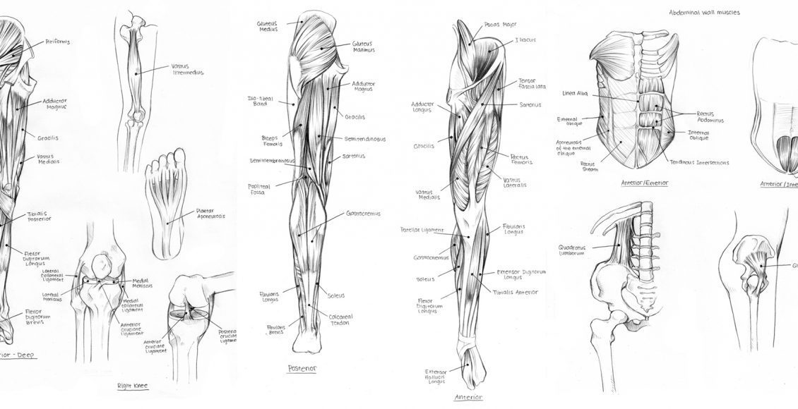 Diagram Of Nerves In Upper Leg El Paso Tx Doctor Of