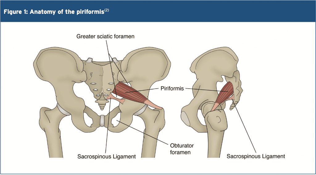 Piriformis Muscle: A Vicious Syndrome | El Paso, TX Doctor ...