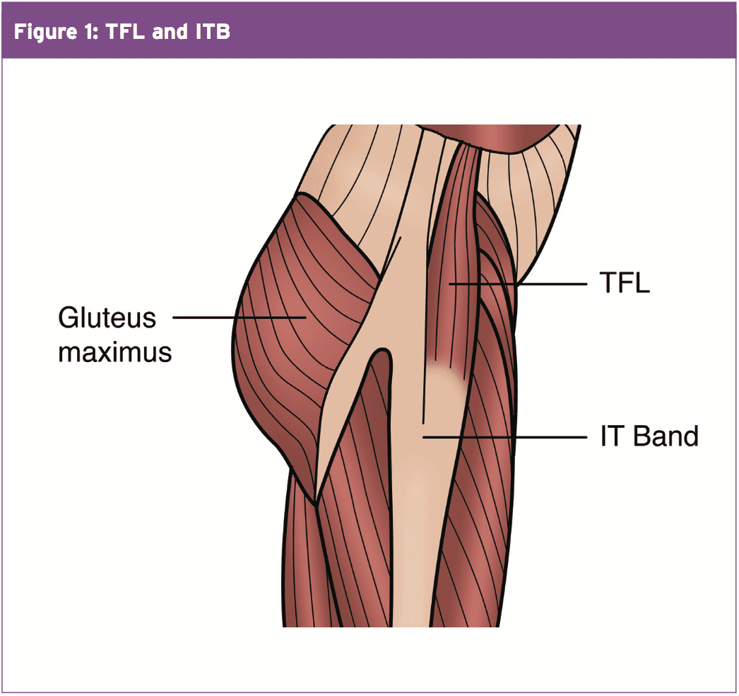 Tensor Fascia Latae: Behind The Mystery • Chiropractic Scientists ...