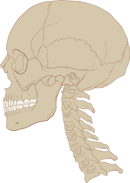 Normal Cervical Curve 2 - El Paso Chiropractor