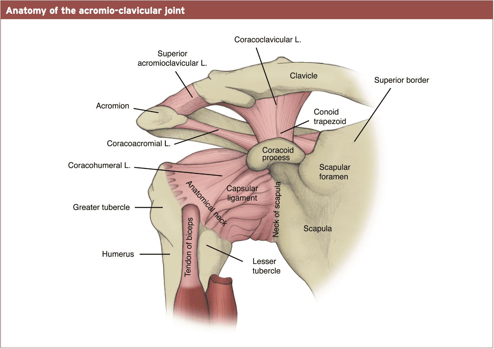 Ausgezeichnet Anatomie Eines Automotors Bilder - Anatomie Von ...