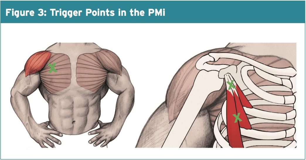 Pectoralis Minor Biomechanics
