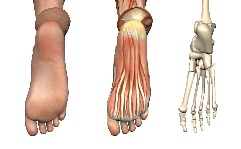 11860 Vista Del Sol Ste. 128 Heel, Foot Pain & Chiropractic Orthotics El Paso, Texas