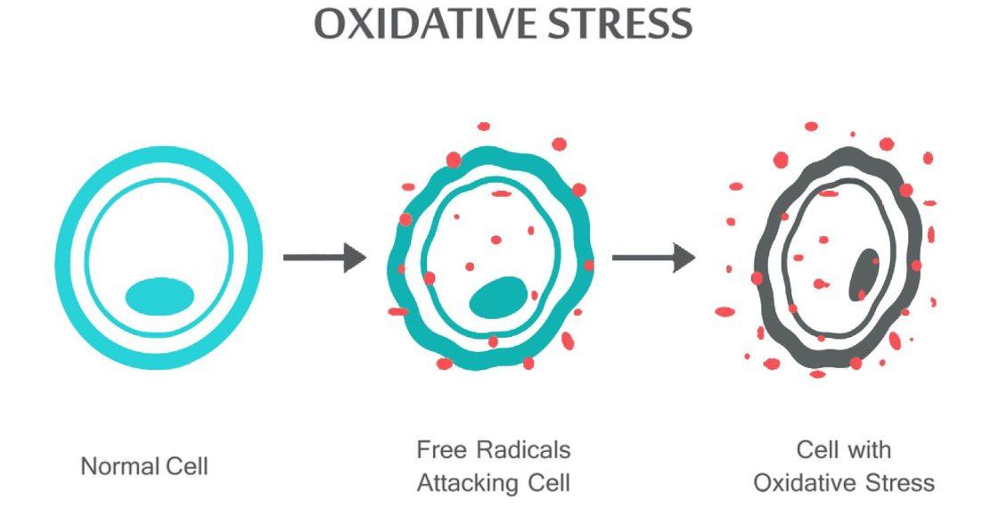 O estresse oxidativo