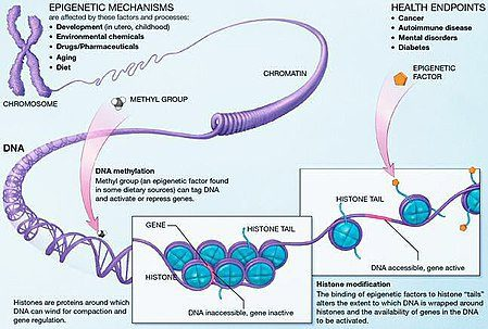 Meccanismi epigenetici
