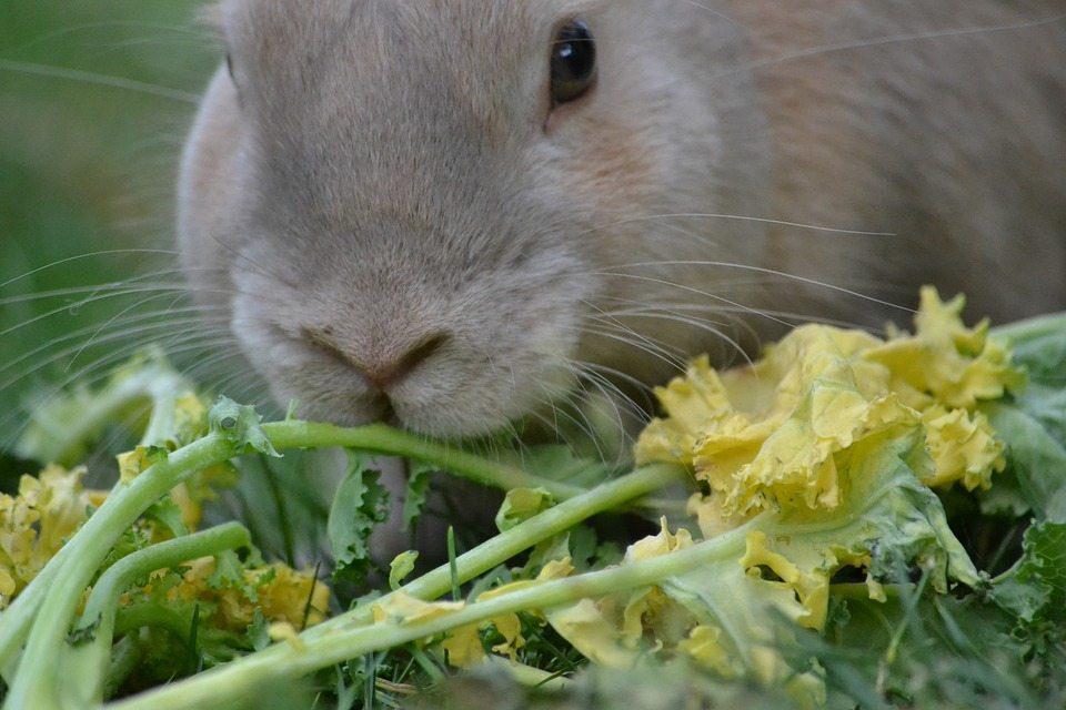 mangiare coniglio