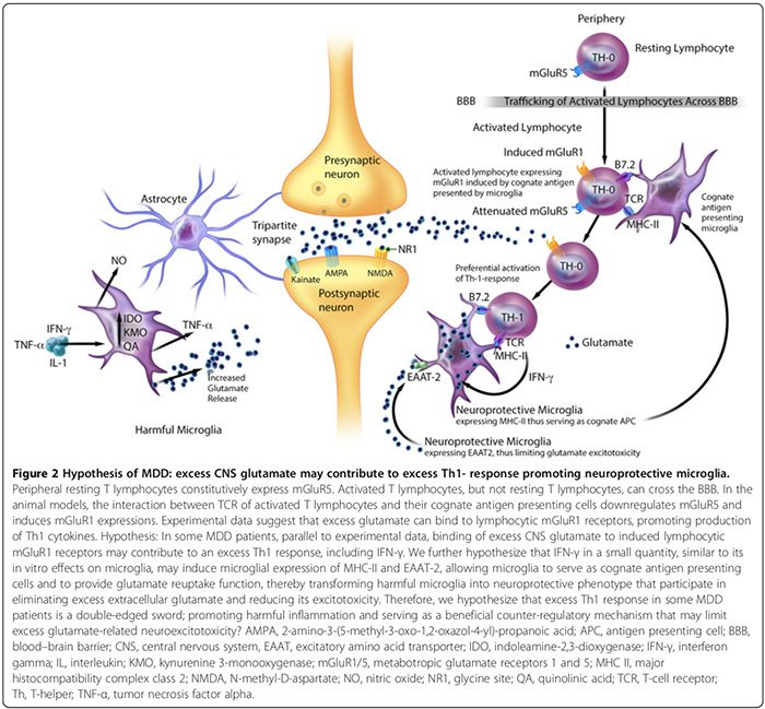 neuroinflammation fig 2