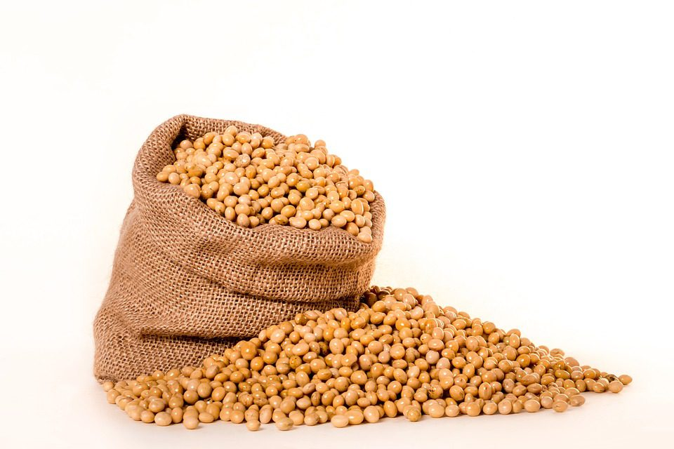 gmos soybeans