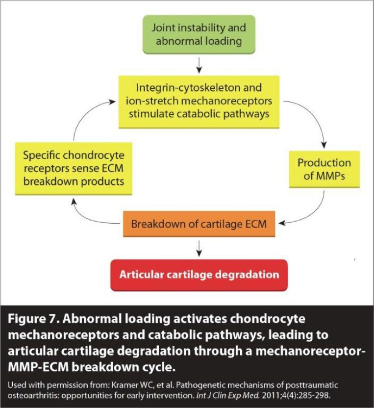 Figure 7 Cervical OA The 3 Phases of the Degenerative Cascade