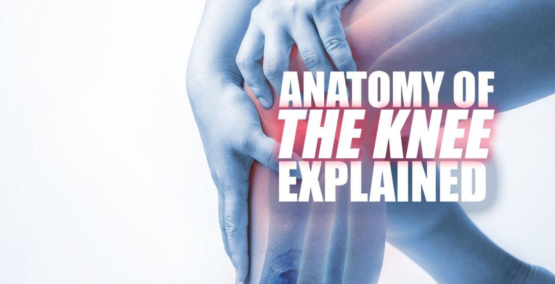 Das Knie | El Paso Chiropraktiker • Dr. Alex Jiménez DC 915-850-0900