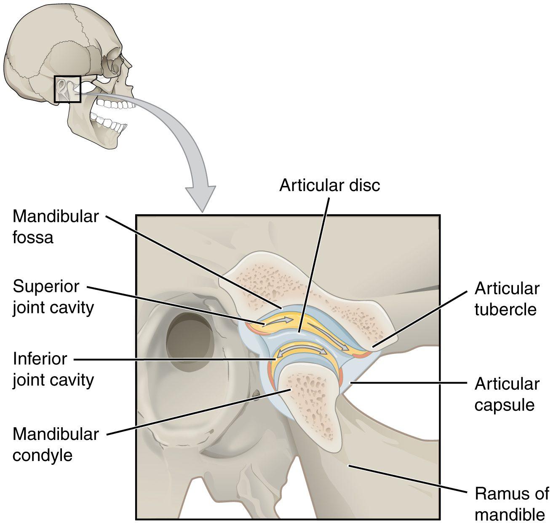 trastorno de la articulación temporomandibular el paso tx.