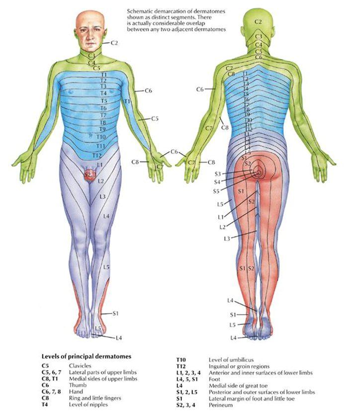 11860 Vista Del Sol, Ste. 128 Sensory Nerves and Deep Tendon Reflexes El Paso, Texas