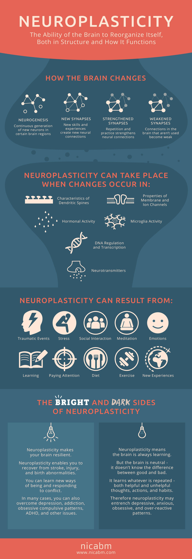neuroembryology el paso tx.