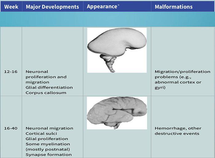 нейроэмбриология el paso tx.