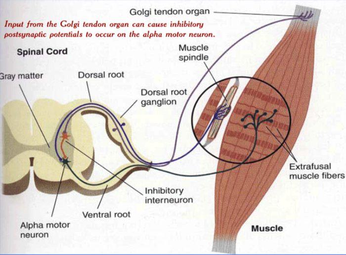 cerebellum el paso tx.