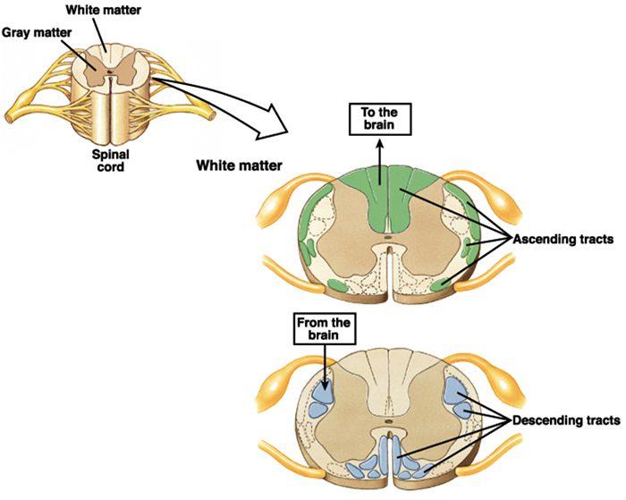 нейрофизиология el paso tx.