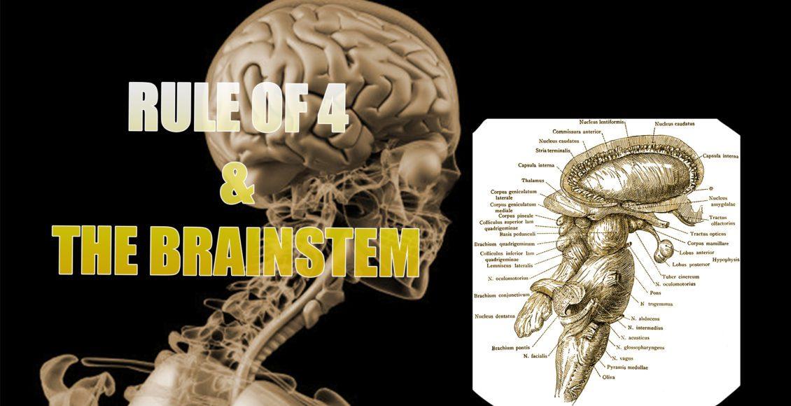Brainstem und die Regel von 4 | El Paso, TX. | Doktor der Chiropraktik