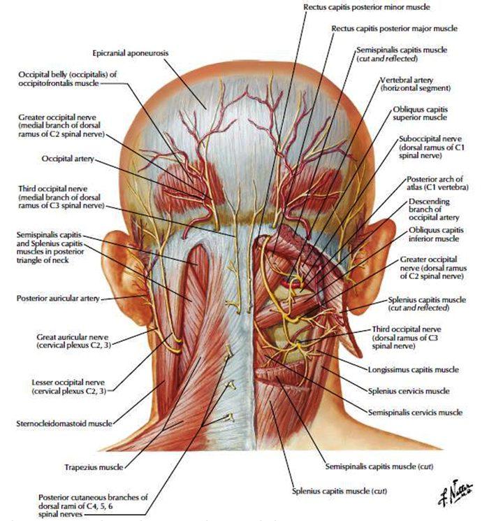 asal sakit kepala el paso tx.