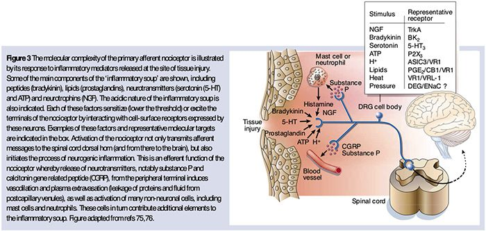 痛みの生化学エルパソtx。