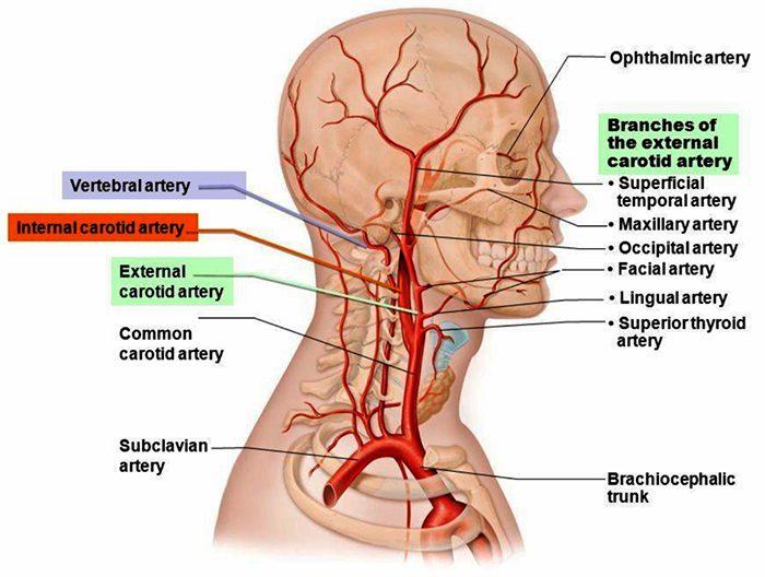 cerebrovascular el paso tx.