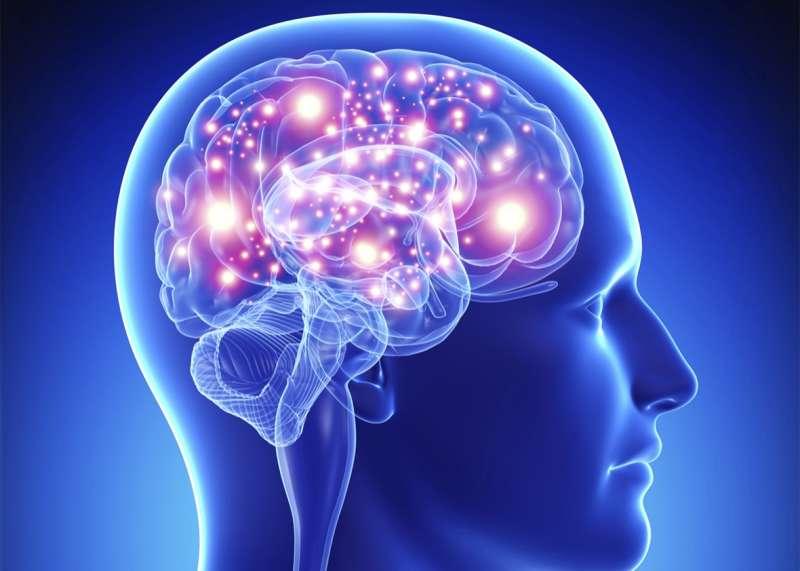 Изображение мозга, используемого для демонстрации влияния Nrf2 на нейродегенеративные заболевания.