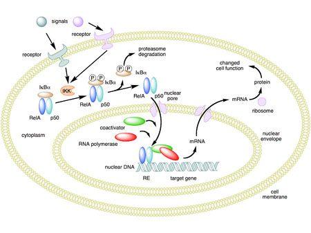 Genómica nutricional el paso tx.