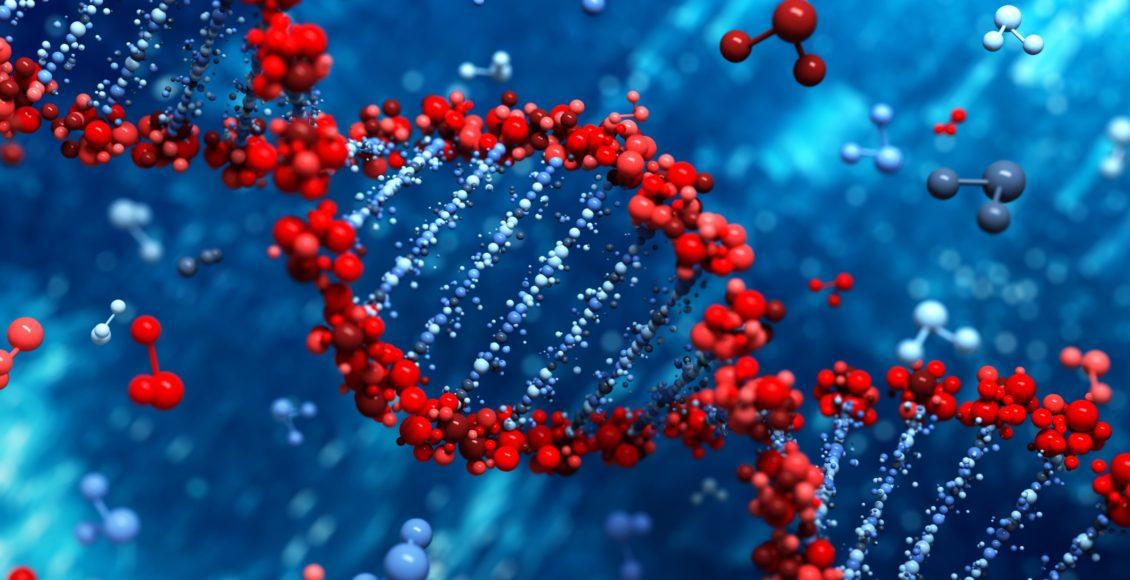 El papel de los adaptógenos de metilación | El Paso, TX Quiropráctico