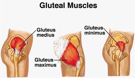 Diagrama de los músculos glúteos 1 | El Paso, TX Quiropráctico