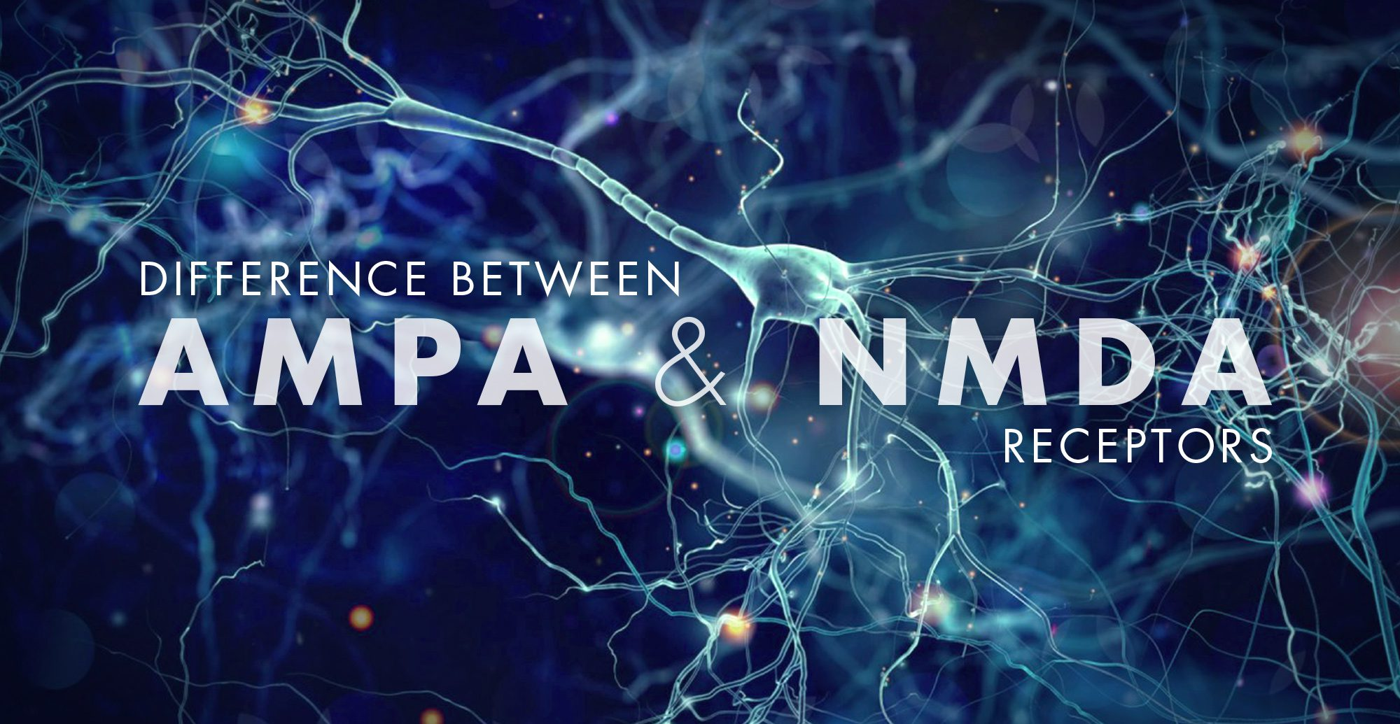 Difference Between AMPA and NMDA Receptors | El Paso, TX Chiropractor