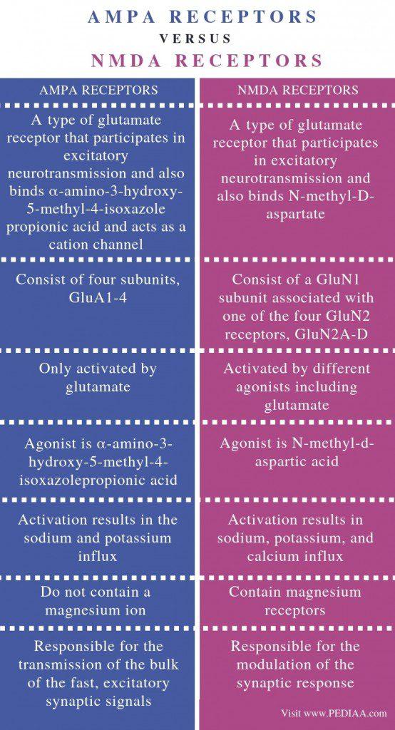 Difference Between AMPA and NMDA Receptors Diagram | El Paso, TX Chiropractor