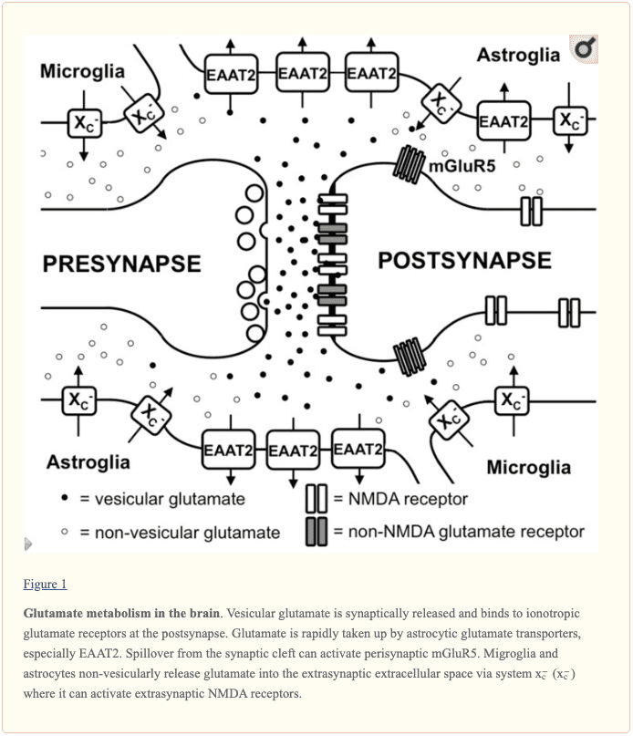 Figure 1 Glutamate Metabolism in the Brain | El Paso, TX Chiropractor