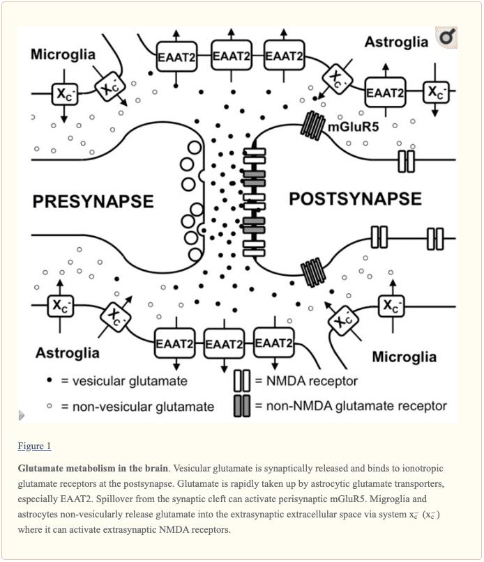 Gambar 1 Metabolisme Glutamat di Otak | El Paso, TX Chiropractor