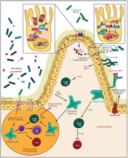 Mikrobų įtaka