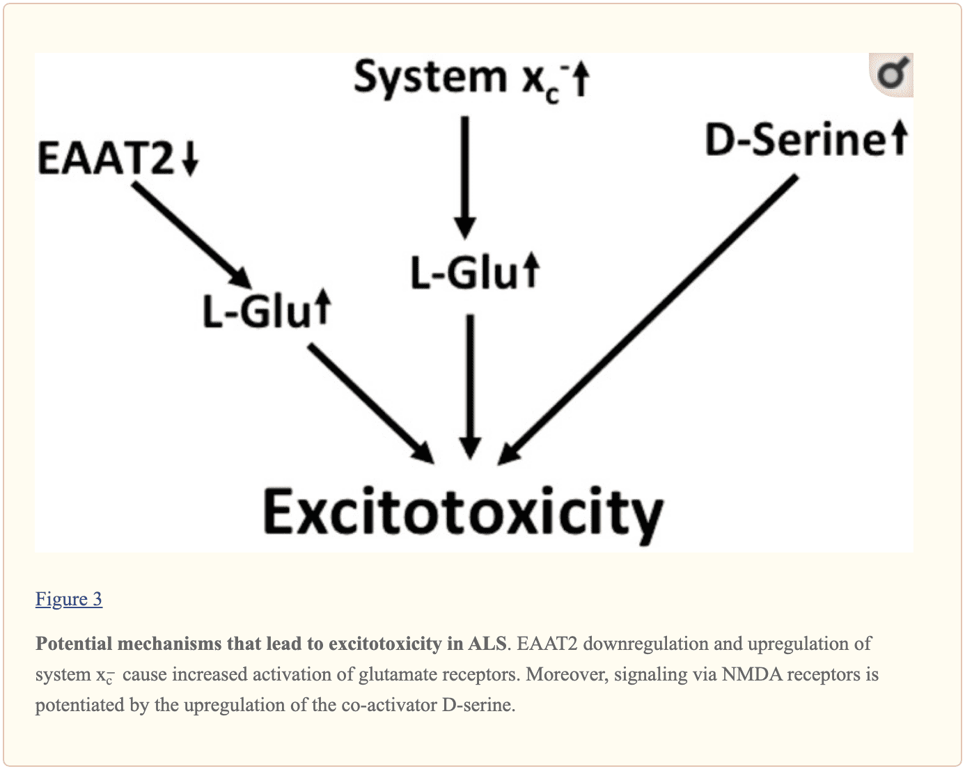 Figure 3 Potential Mechanisms for Excitotoxicity in ALS | El Paso, TX Chiropractor