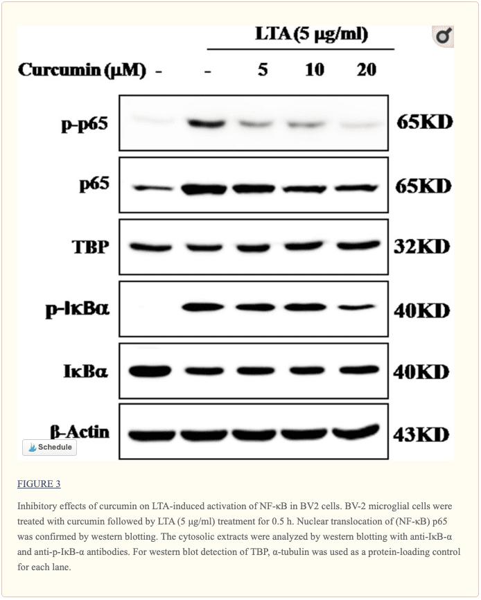 Figure 3 Inhibitory Effects of Curcumin | El Paso, TX Chiropractor