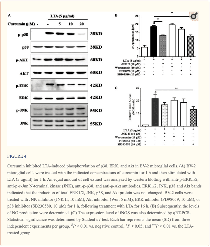 Figure 4 Curcumin Inhibited LTA-Induced Phosphorylation | El Paso, TX Chiropractor