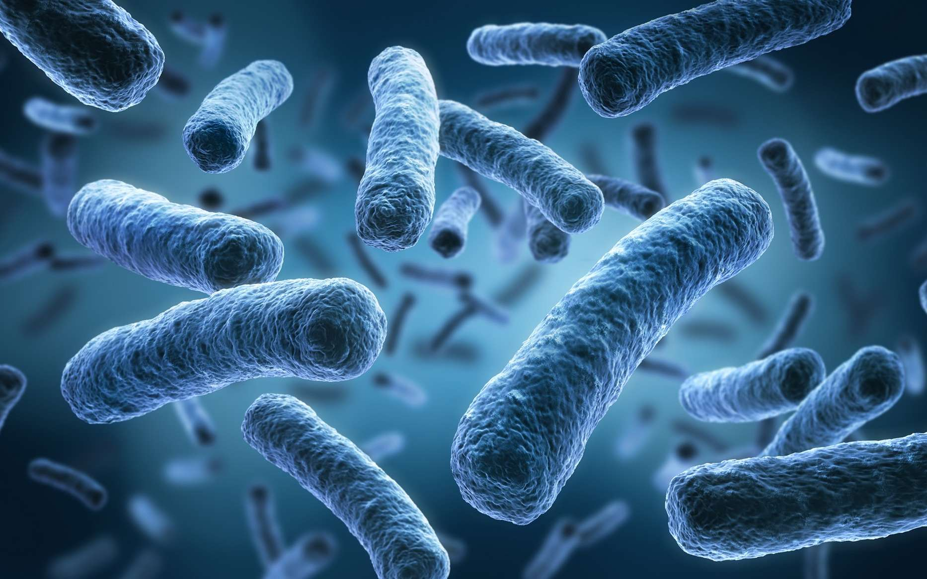 Functional Neurology: The Brain and the Gut Microbiome Connection | El Paso, TX Chiropractor