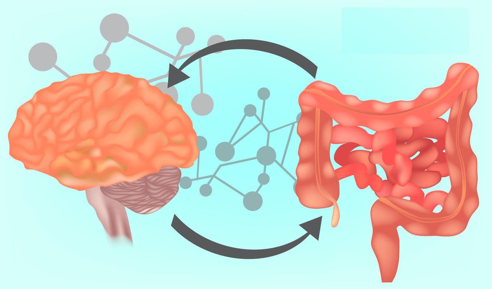 Функциональная неврология: что такое ось кишечника и мозга? | Эль Пасо, Техас Хиропрактик