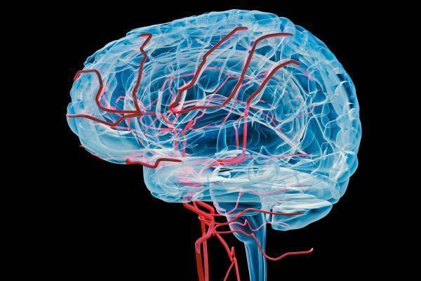 Neurologia funzionale: 8 passaggi per migliorare una barriera di perdita di sangue nel cervello | Chiropratico El Paso, TX