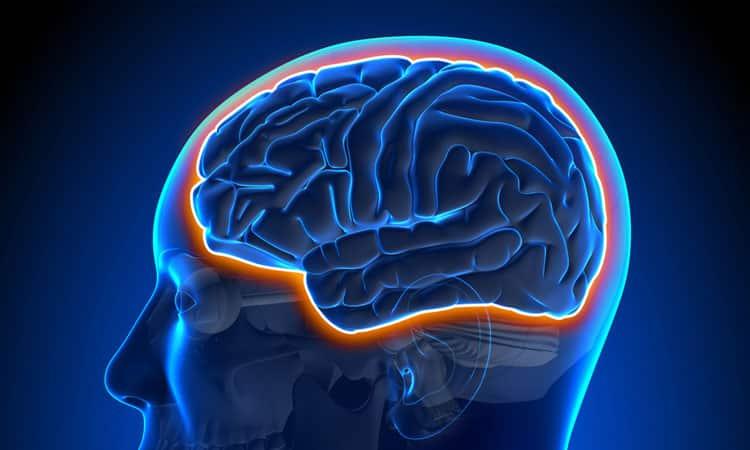 Neurologia funzionale: la barriera emato-encefalica e la salute del cervello | Chiropratico El Paso, TX