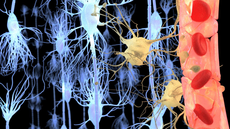 Neurologia funcional: qual é o papel da barreira hematoencefálica? | El Paso, TX Quiroprático